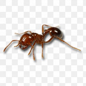 Predator Drone - Red Imported Fire Ant Mosquito Black Imported Fire Ant Animal Bite PNG