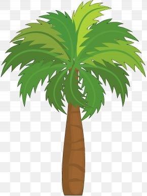 Asian Palmyra Palm Coconut Leaf Plant Stem Plants PNG