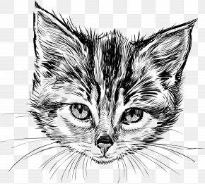 Kitten - Cat Kitten Drawing PNG