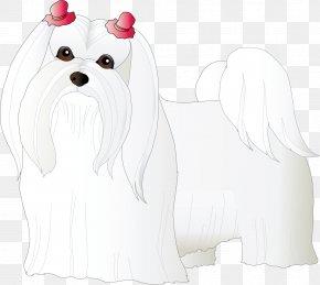 Dog - Maltese Dog Puppy Bichon Frise Dog Breed Companion Dog PNG