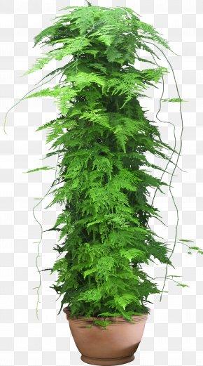 Flower Pot - Web Template Plant PNG