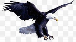 Eagle - Eagle Flight Hawk PNG