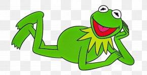 Shrub Frog Tree Frog - Green Frog Hyla Agalychnis Gray Treefrog PNG