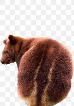 Kangaroo - National Zoo & Aquarium Tree-kangaroo Rhinoceros Eurovision Song Contest 2016 PNG