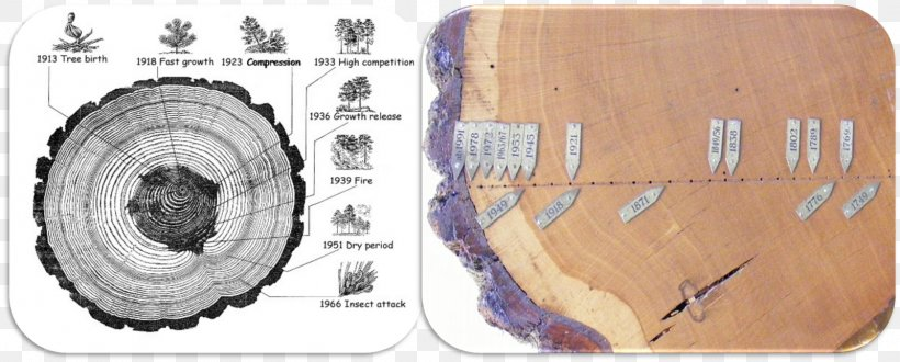 Dendrochronology Tree Rings And Environment Dendroecology