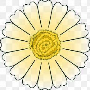 Free Daisy Images - Flower Petal Common Daisy Clip Art PNG