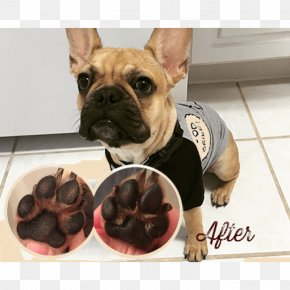 Frenchie - French Bulldog Toy Bulldog Paw Dog Breed PNG