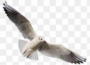 Seagull - Bird Gulls DeviantArt Photography PNG