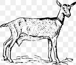 Sheep - Black Bengal Goat Boer Goat Russian White Goat Anglo-Nubian Goat Clip Art PNG