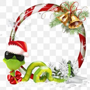 Christmas - Christmas Ornament Photography Image Hosting Service PNG