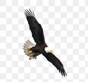 Eagle Image, Free Download - Warner Christian Academy Flying Eagle Cent Hotel Recreation Dynamic Discs PNG
