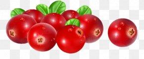 Cranberries Illustration - Vector Graphics Stock Illustration Stock Photography Cranberry PNG