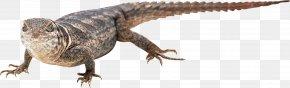 Lizard - Lizard Clip Art PNG