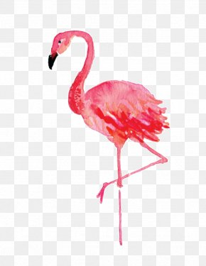 Flamingos - Stephenville Flamingo Watercolor Painting Drawing Canvas PNG