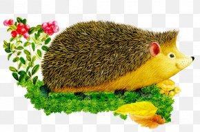 Hedgehog - European Hedgehog Animal Alphabet For Children. PNG