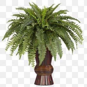 Fern - Nephrolepis Exaltata Fern Bamboo Silk Vine PNG