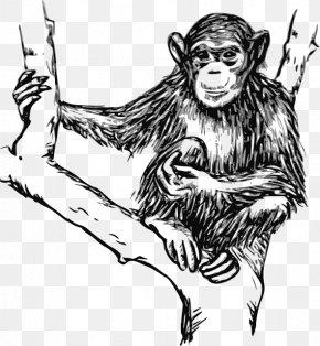 Hairy - Chimpanzee Ape Line Art Drawing Clip Art PNG