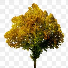 Image Tree Autumn Clip Art PNG