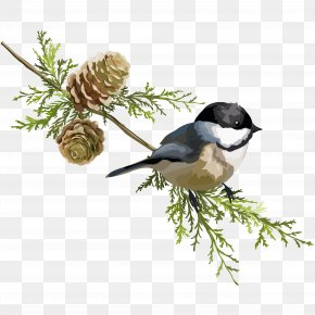 Pine Trees And Birds - Stock Illustration PNG