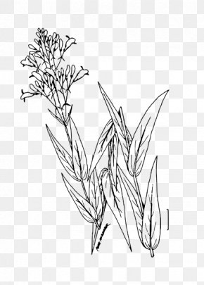 Twig /m/02csf Line Art Drawing Plant Stem PNG