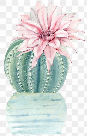 Water Color Flower Plant Cactus PNG