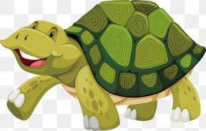 Turtle Vector - Turtle Shell Stock Photography Illustration PNG