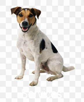 Pets - Dog Pet Sitting Puppy Cat PNG