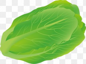 Cabbage Vector Material - Euclidean Vector Download Salad PNG