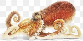 Giant Pacific Octopus Prize - Octopus Cartoon PNG