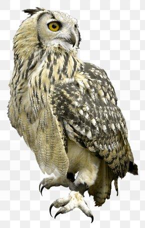 Owl - Great Grey Owl Bird Hawk PNG