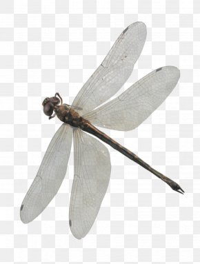 Dragonfly 2 - Dragonfly PNG