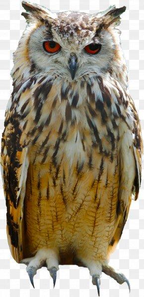 Owl - Great Horned Owl Bird Eurasian Eagle-owl Columbidae PNG