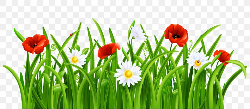 Clip Art Borders And Frames Openclipart Illustration, PNG, 1600x703px, Borders And Frames, Drawing, Flower, Flowering Plant, Grass Download Free