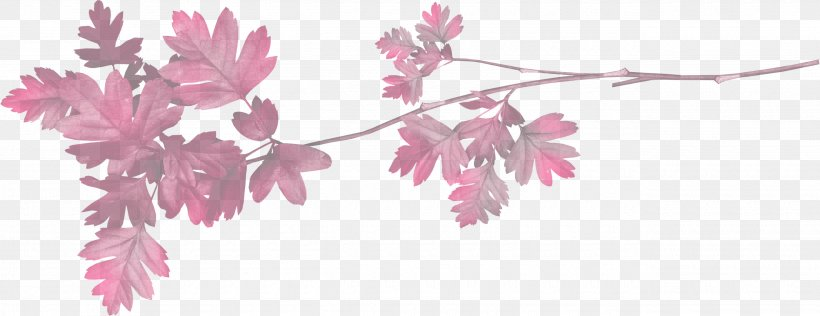 Pink Flower Leaf Plant Branch, PNG, 2600x1005px, Pink, Branch, Flower, Flowering Plant, Leaf Download Free