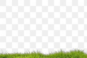 Plant Sky - Grass Green Lawn Grassland Vegetation PNG