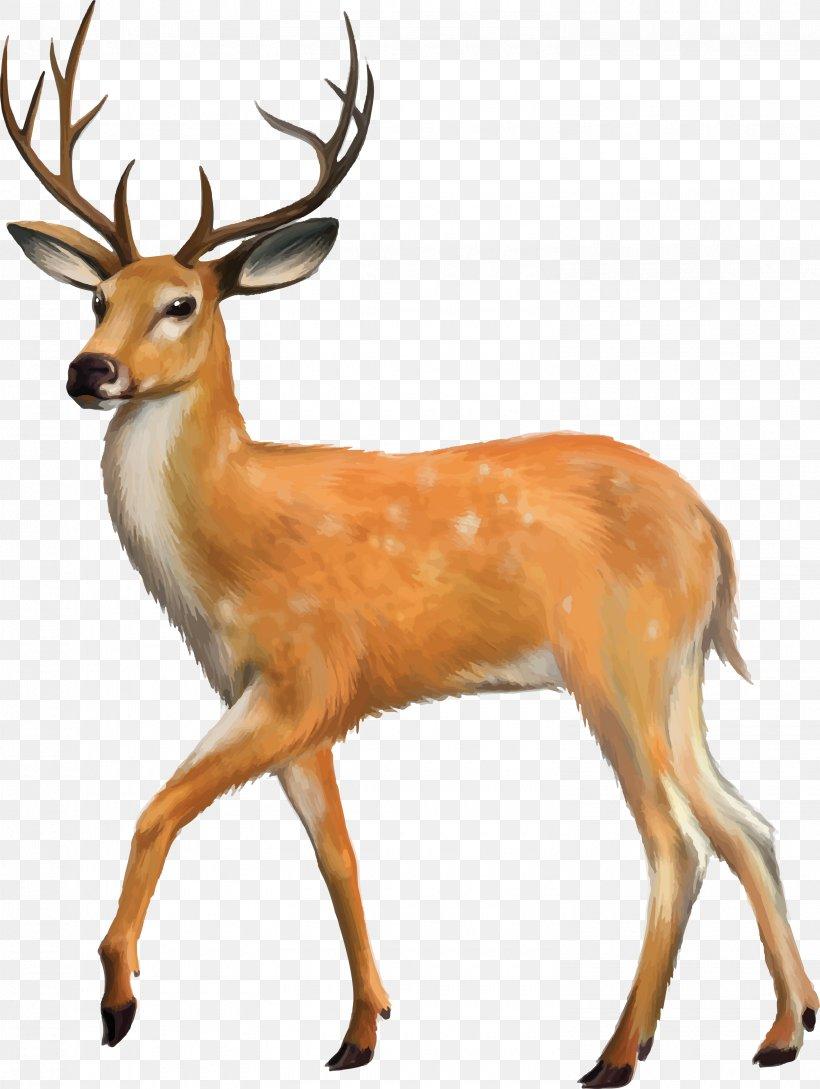 White Tailed Deer Desktop Wallpaper Mule Deer Roe Deer Png 3010x4000px Deer Antler Deer Hunting Display
