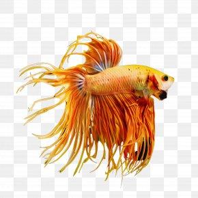 Tail Fish - Fish Fish Tail PNG