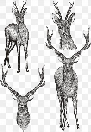 Vector Hand Painted Deer - Drawing Photography Illustration PNG