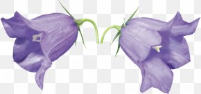 Creative Lily Of The Valley - Flower Raster Graphics Clip Art PNG