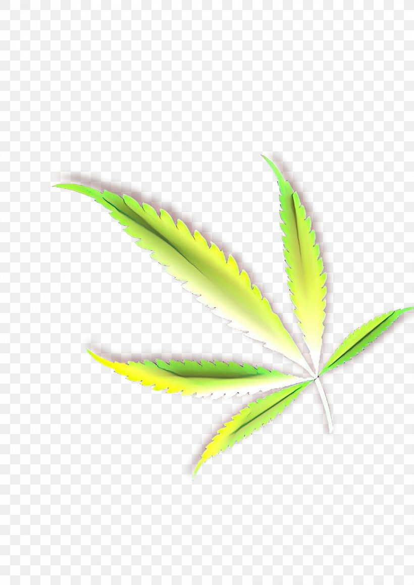 Leaf Green Plant Flower Terrestrial Plant, PNG, 1697x2400px, Cartoon, Flower, Flowering Plant, Grass, Green Download Free