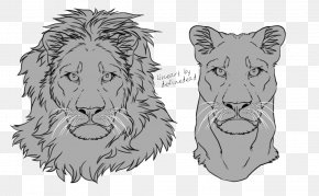 Drawing Lion - Lion Tiger Felidae Whiskers Sketch PNG