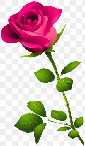 Pink Rose With Stem Clipart Image - Rose Pink Flower Clip Art PNG