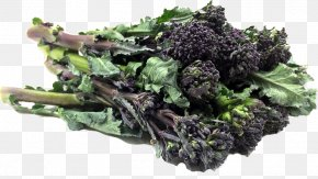 Broccoli Sprouts - Broccolini Vegetarian Cuisine Curly Kale Rapini PNG