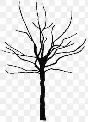 Tree Outline Cliparts - Tree Oak Black And White Clip Art PNG
