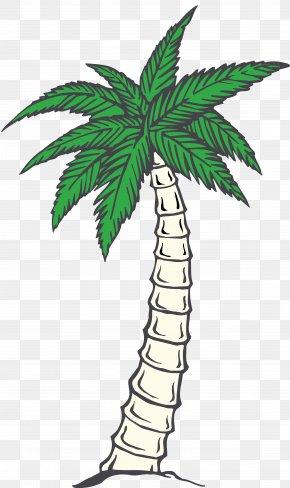 Tropical Plant - Playa Bonita Mexican Restaurant Mexican Cuisine Mario's Mexican And Salvadorian Restaurant PNG