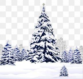 Pine Tree - Christmas Saint Nicholas Day Desktop Wallpaper Clip Art PNG