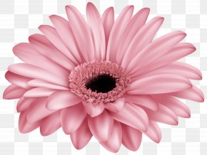 Pink Gerber Clip Art Image - Transvaal Daisy Pink Flower Common Daisy Color PNG