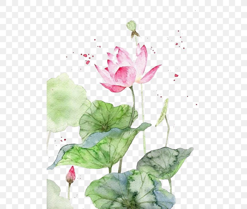 Watercolor Painting Watercolour Flowers Art Chinese Painting, PNG, 510x696px, Watercolor Painting, Aquatic Plant, Art, Asian Art, Chinese Art Download Free