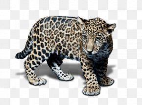 Dog Like Mammal - Snow Leopard Jaguar Cheetah Terrestrial Animal PNG