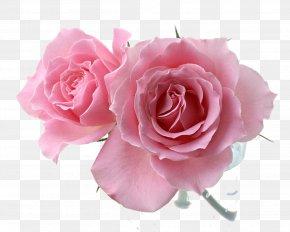 Blooming Flowers - Pink Drawing Flower Rosa 'Eden' PNG